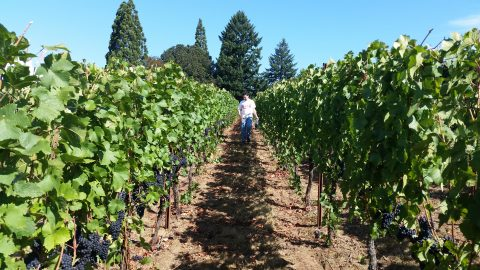 Harvest 2015 is coming…