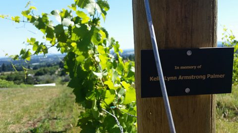 Row 1, Block 1 of the Bells Up estate vineyard: Honoring the woman who inspired us to turn the winery dream into reality.