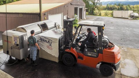 Harvest 2016: Pressing the pinot noirs.