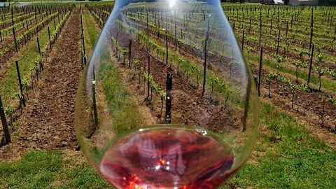 """Sips N Tips Calls 2018 Prelude Estate Rosé """"Perfectly Balanced for Meal Pairings"""""""