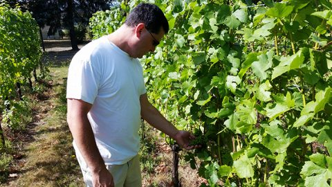 Vineyard walk-through, grape check at Tonnelier Vineyard.