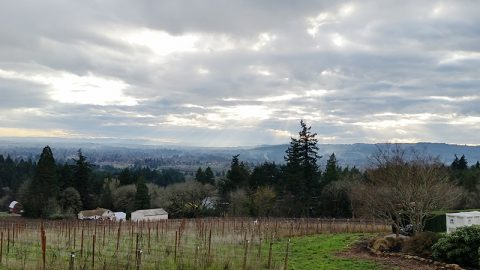 Bells Up Featured on The Vine Less Traveled Wine Blog