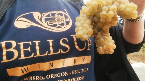 Our First Seyval Blanc Harvest – Sunday, September 19, 2017