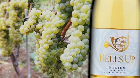 """Napa Valley Register Highlights Bells Up' Helios Seyval Blanc as a """"Weird Wine"""""""