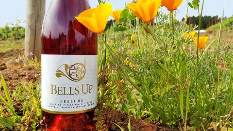 Washington Wine Blog Names 2019 Prelude A Top Oregon Wine in 2020 Rosé Report