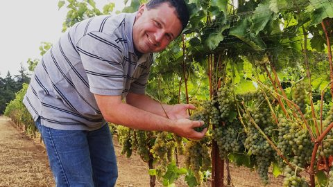 """Bells Up's Seyval Blanc Part Of """"The Future Of Winemaking"""""""